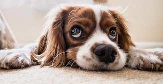 Генетика влияет даже на наших питомцев: собаку мы заводим инстинктивно