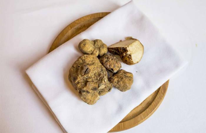 Трюфели - самые дорогие грибы