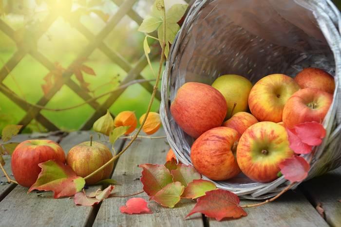 Яблоки - и вкусны, и полезны,и очень нужны