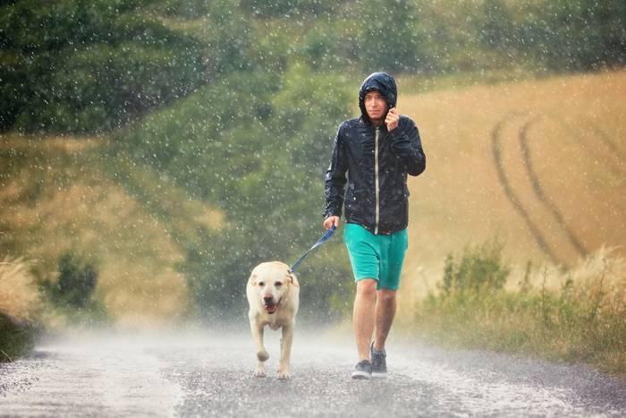 Пес — отличный компаньон для утренних тренировок