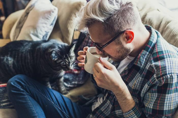 Коты приносят радость, разве нет?