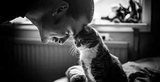 Сколько времени нужно гладить кота, чтобы снять стресс - исследование