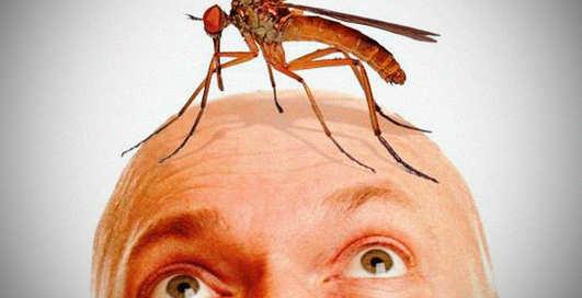Маленькие вампиры: почему комары одних кусают, а других нет?
