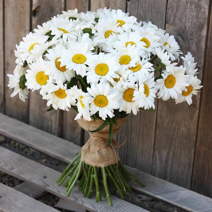 Ромашка — изысканный цветок, восхищающий своей простотой и беспечной легкостью