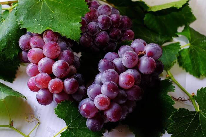Виноград - невероятно полезный продукт в любом его виде