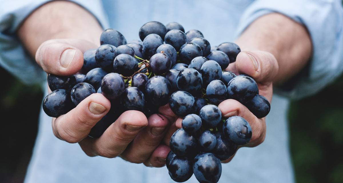Гроздь здоровья: 4 полезных свойства винограда