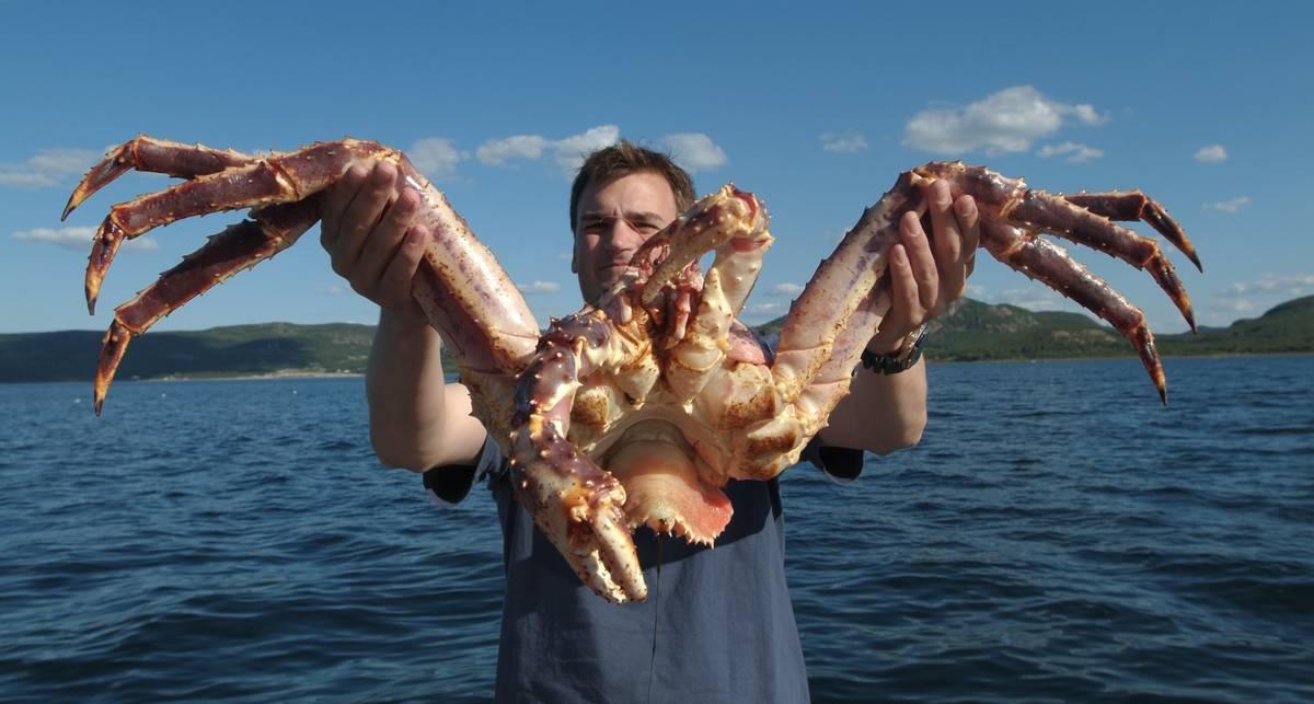 Дары Нептуна: как правильно выбирать морепродукты?