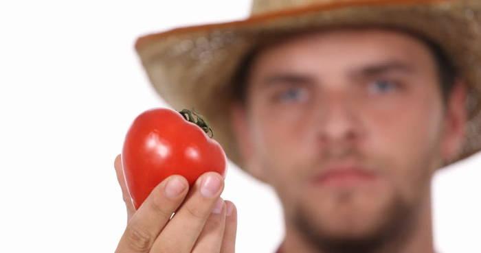 Томаты хорошо влияют на половые клетки. Что ж, помидоры хотя бы вкусные