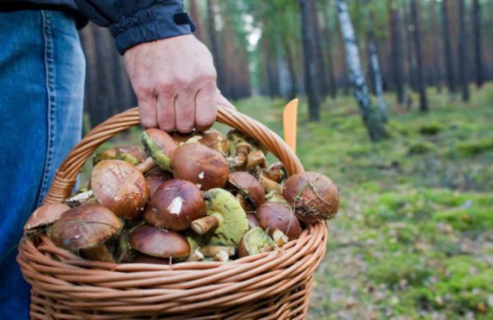 Сбор грибов - целое искусство