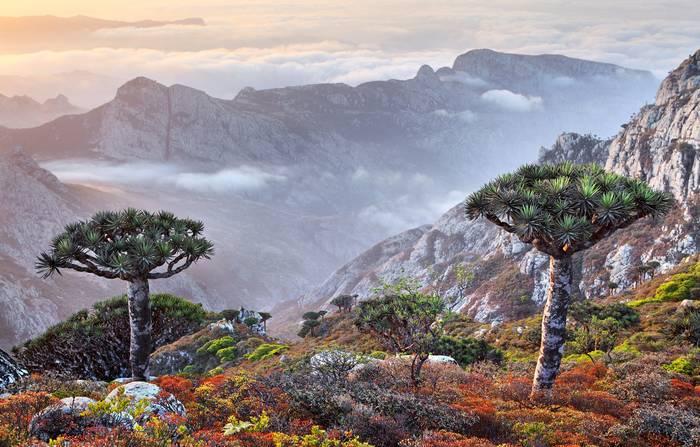 Остров Сокотра. Там сохранились редчайшие виды флоры и фауны