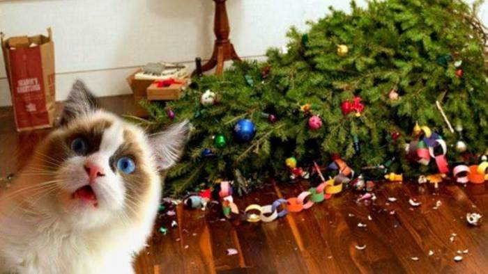 Придумал, где поставить елку? Придумай, как обезопасить ее от кота