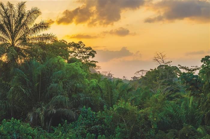 Загадочную Либерию можно назвать страной первозданных тропических лесов
