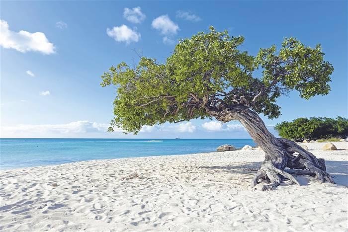 Аруба привлекает белоснежными песчаными пляжами и экологичностью