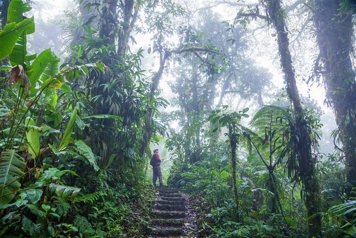 Будь осторожен: в лесах Коста-Рики можешь встретить шимпанзе