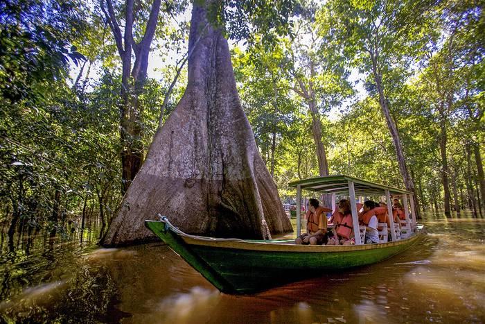 Амазонские джунгли - самый большой тропический лес в мире