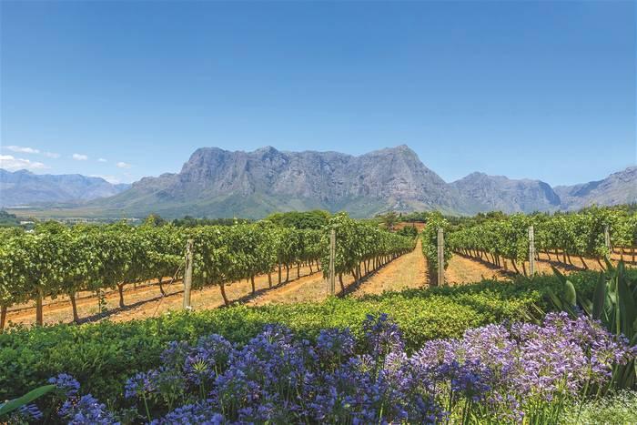 В Южной Африке и сафари отличные, и вина превосходные