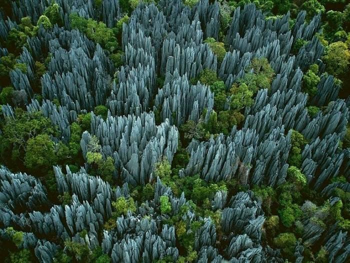 Каменный лес, Мадагаскар. А когда-то тут был океан