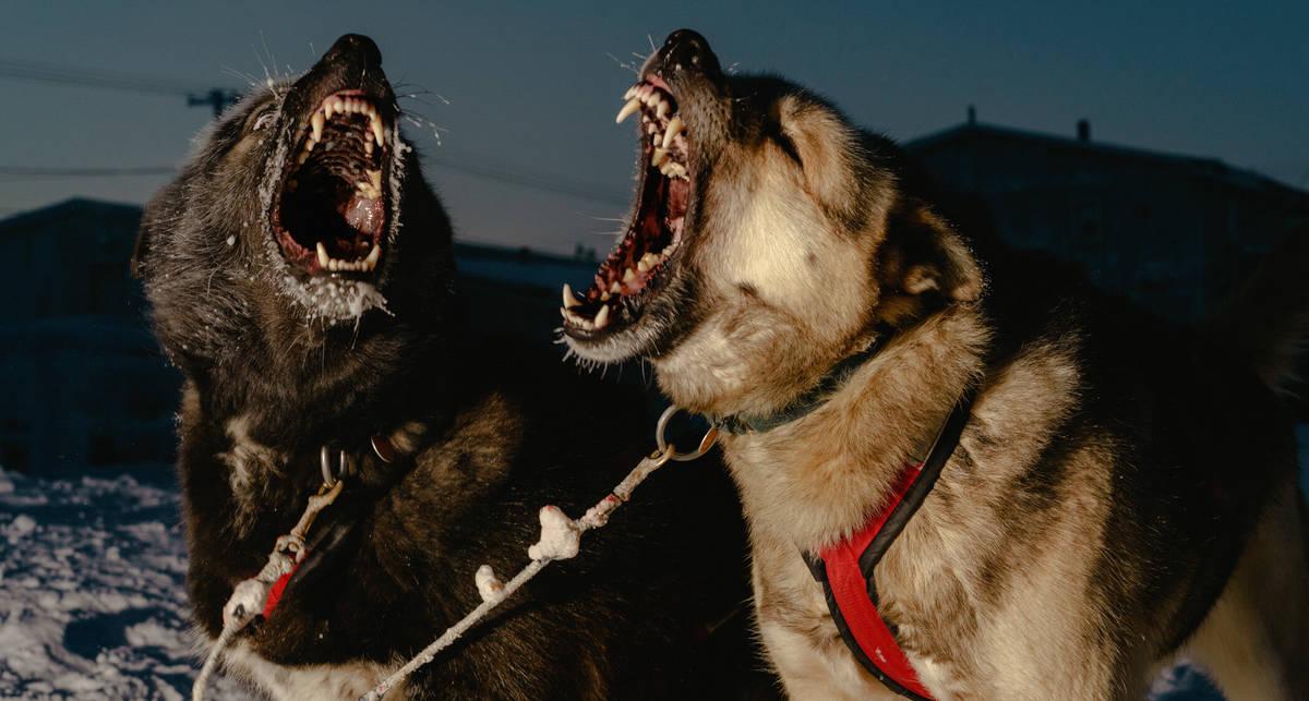 Псы, снега, глухая ночь: фото суровой жизни самого северного города Аляски