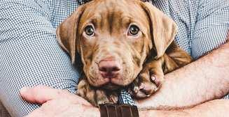 Советы собачникам: как вести себя со щенком в первые дни его жизни в доме