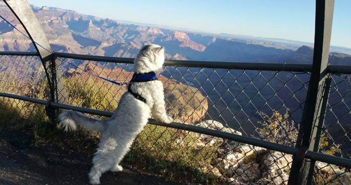 Выгуляй кота — свози его поглазеть на одно из самых экзотических мест планеты