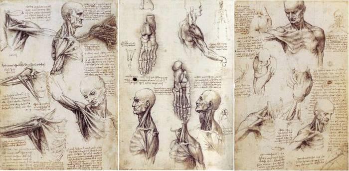 Леонардо тщательно изучал строение тела человека