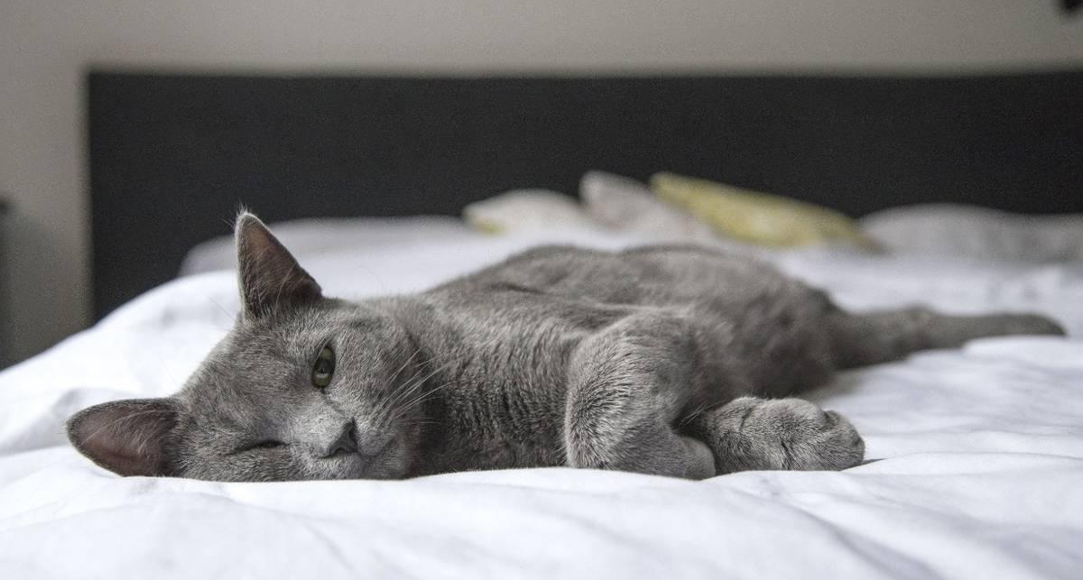 Как сделать лежанку для кота своими руками: советы экспертов НЛО TV
