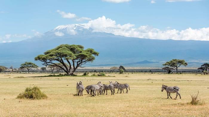 На сафари в Кении можно устроить и фотоохоту