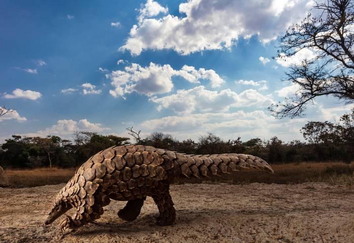 Brent Stirton/Sony World Photography Awards 2020