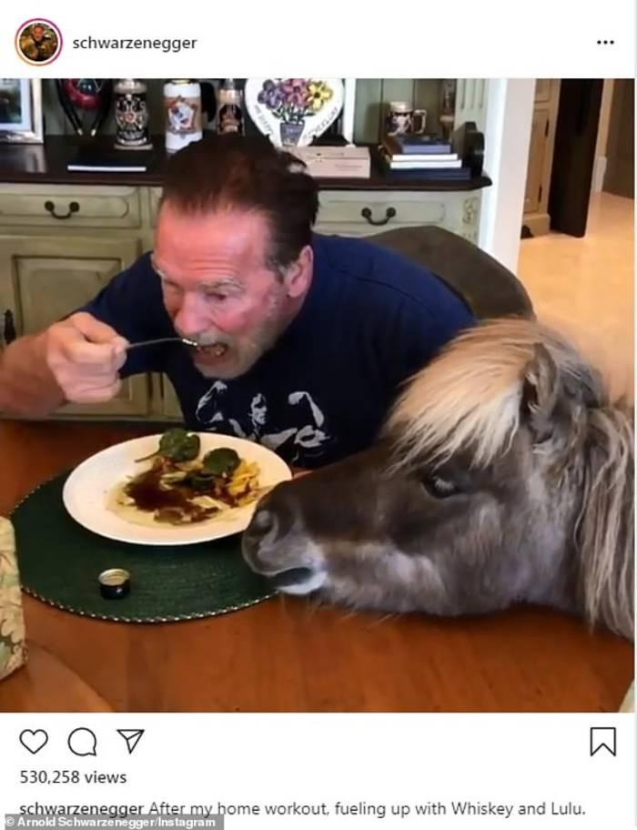Шварценеггер предпочитает на обед стейк с салатом в компании своих питомцев