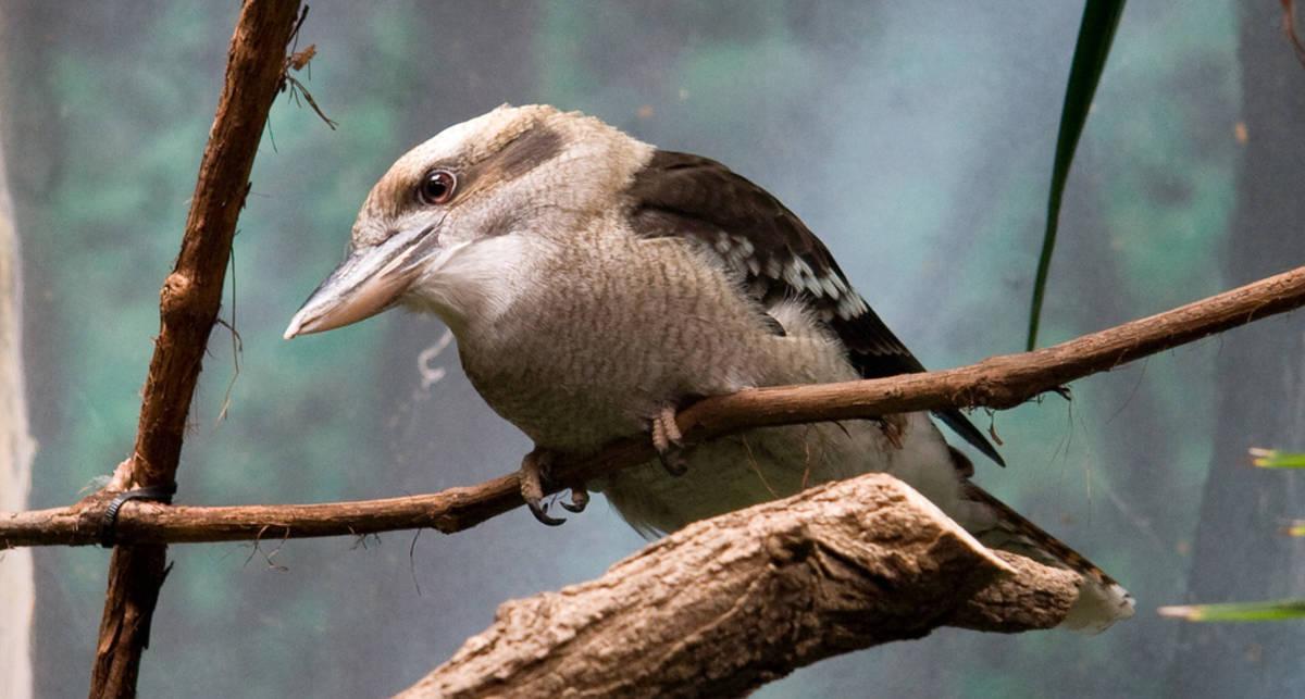 Редкая птица проехала в решетке радиатора 700 км