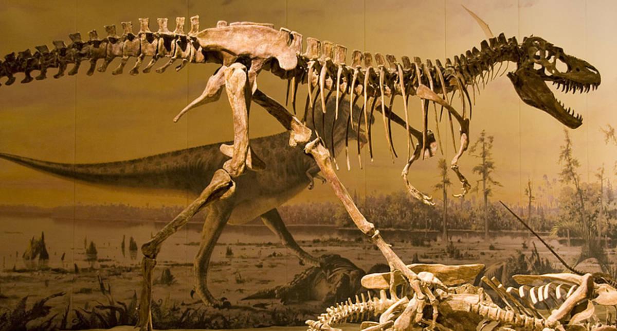 Сколько стоят кости динозавров?