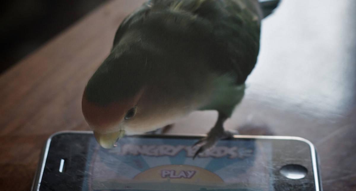Злоумышленники подделывают вирусы под Angry Birds