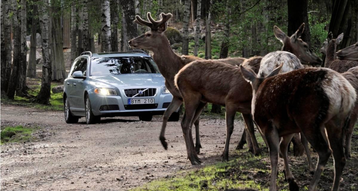 Volvo перестанет сбивать оленей (фото)