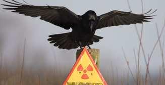 Авария на ЧАЭС: шесть фактов о радиации