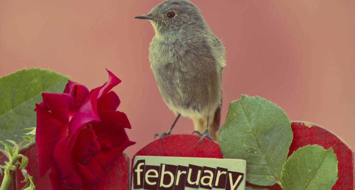 День святого Валентина: чего хотят женщины