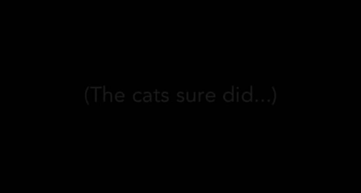 Коты тоже умеють играть на iPad (видео)