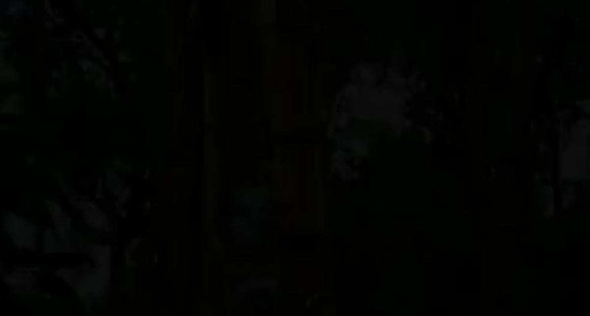 Лазающий по деревьям робот Treebot