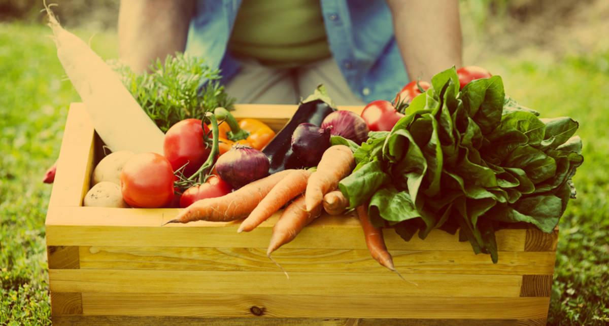 Доктора из огорода: ТОП-7 самых полезных овощей