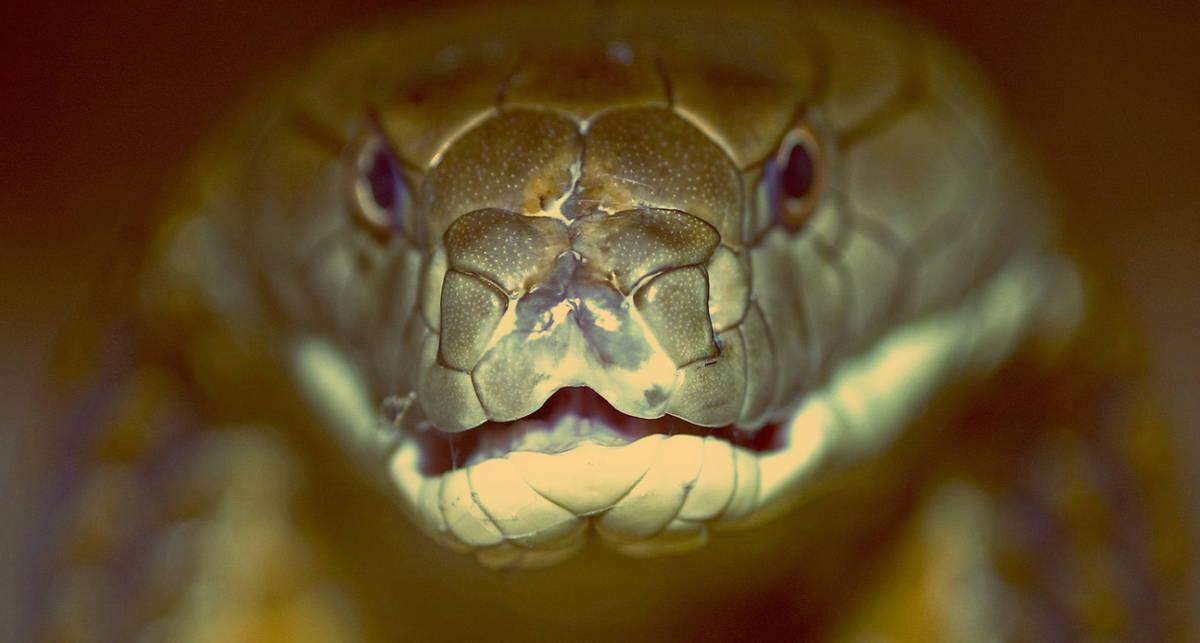 Укус змеи: что делать в таких ситуациях
