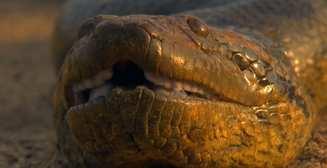 Королева змей: 10 интересных фактов об анаконде