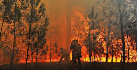 Лесные пожары: ТОП-5 самых губительных