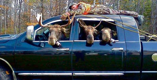 Пьяный лось: за что в США сажают за решетку