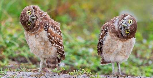 Опасные пернатые: 10 птиц с крутыми защитными механизмами