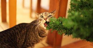 Коты и елки: 40 фото новогоднего беспредела