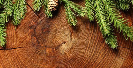 Как стильно украсить новогоднюю елку: советы холостяку