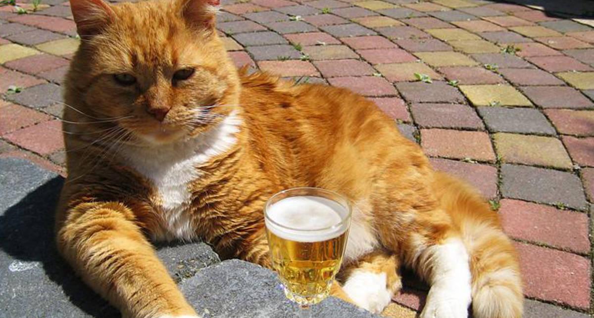 День кота: смешные видео с мохнатыми беспредельщиками