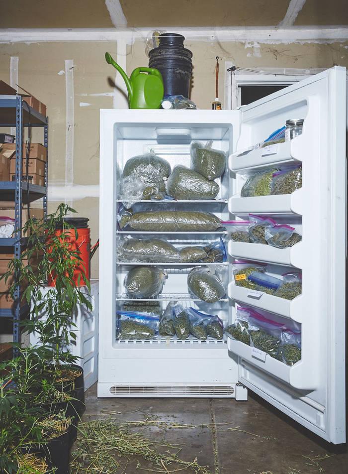 Марихуана в холодильнике марихуана влияние на зачатия