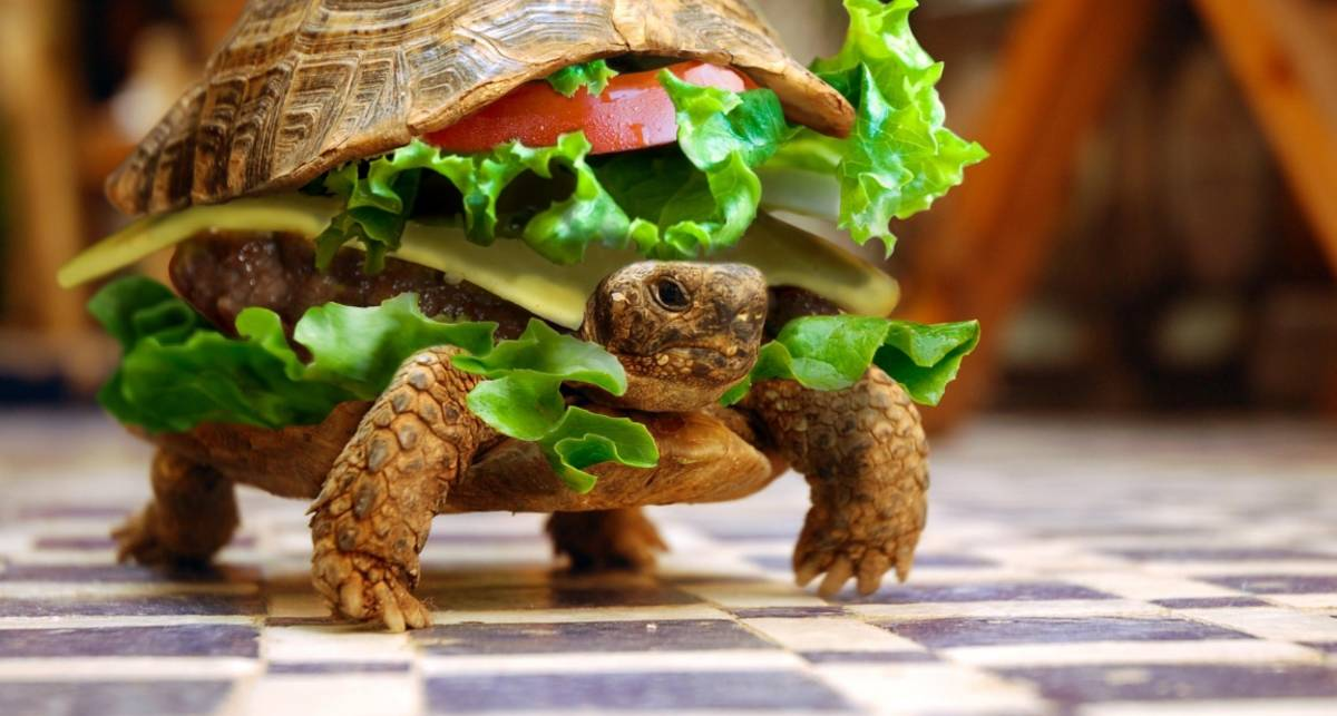 Бутерброды к завтраку, которых ты еще не ел