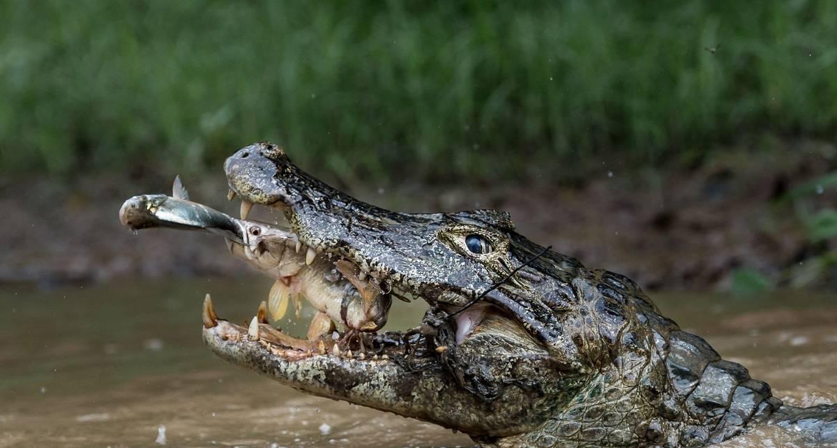 Лучшие фото природы 2016 по версии National Geographic