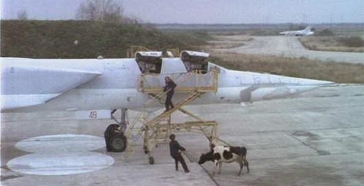Коровы в самолете: 10 чокнутых грузов, отправленных воздухом